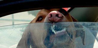 อย่าทิ้งหมาไว้บนรถ